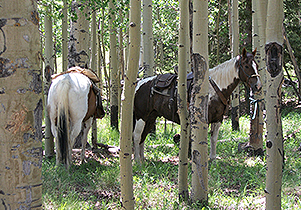 View of Horse Through Trees